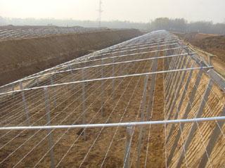 温室保温大棚工程案例
