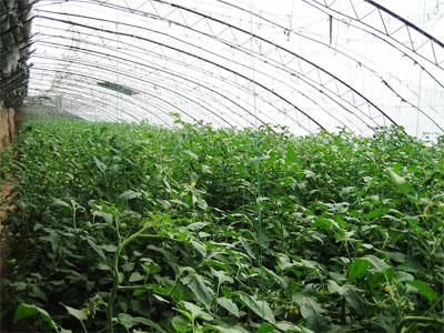 温室蔬菜大棚